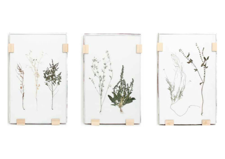 Herbarium – botanical pictures by Maarten Kolk & Guus Kusters at Different Like a Zoo